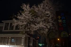 青笹町夜桜