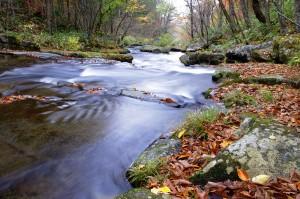 秋の琴畑川